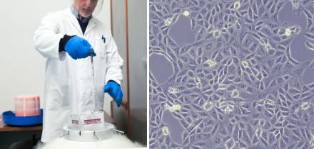 Cómo descongelar células: guía para obtener resultados más reproducibles