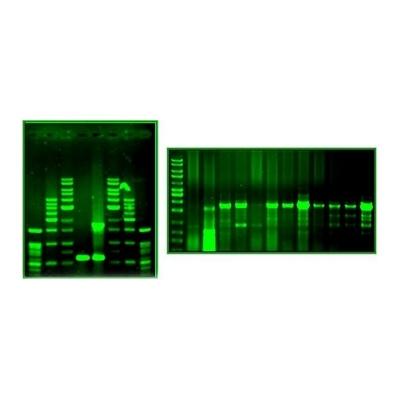 Green-DNA Dye BioBasic, listo para usar, calidad biotecnología - 1.5 ml